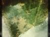 leaf-building
