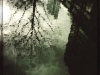 reflected-tree