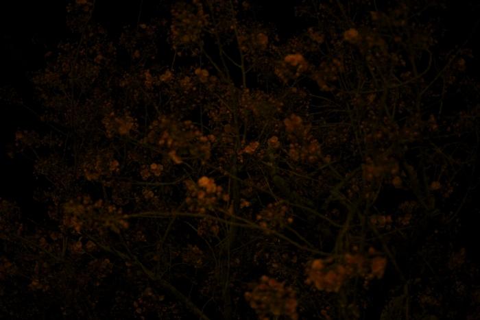 the-night-trees-ii-3