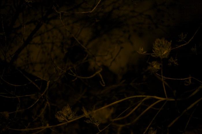 the-night-trees-ii-10