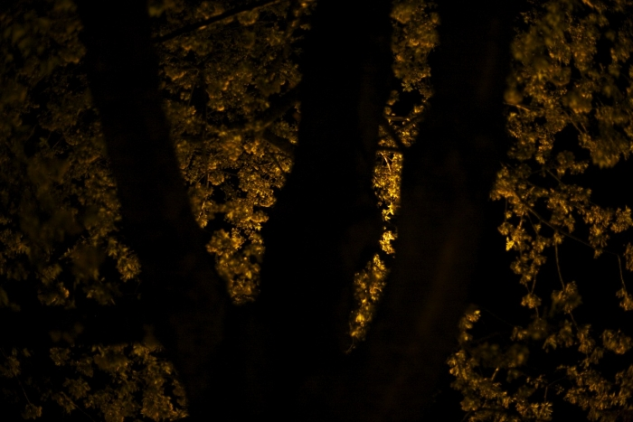 the-night-trees-ii-7
